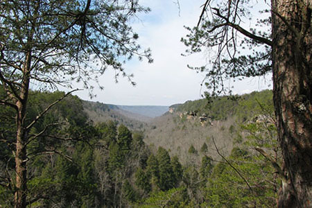 view of Savage Gulf from Rattlesnake Point